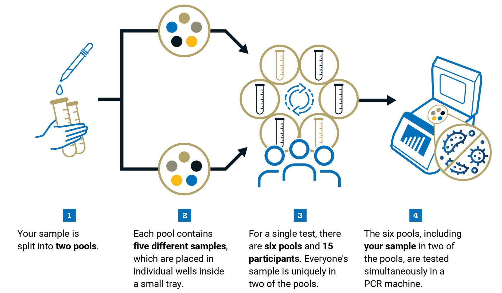 1. Your sample is split into two pools. 2. Each pool contains five different samples, which are placed in individual wells inside a small tray. 3. For a single test, there are six pools and 15 participants. Everyone's sample is uniquely in two of the pools. 4. The six pools, including your sample in two of the pools, are tested simultaneously in a PCR machine.